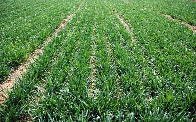 农业农村部部署今年农作物春季病虫害防治工作