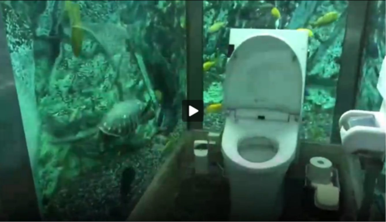 如厕时被鱼围观 该厕所仅限女性使用