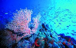 大堡礁珊瑚白化后恢复能力减弱