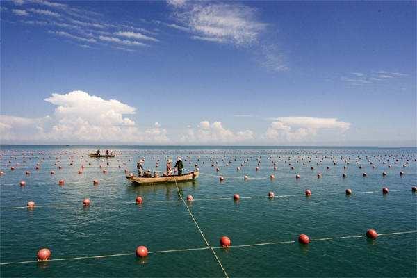海洋渔业增养殖生态模拟项目在青启动