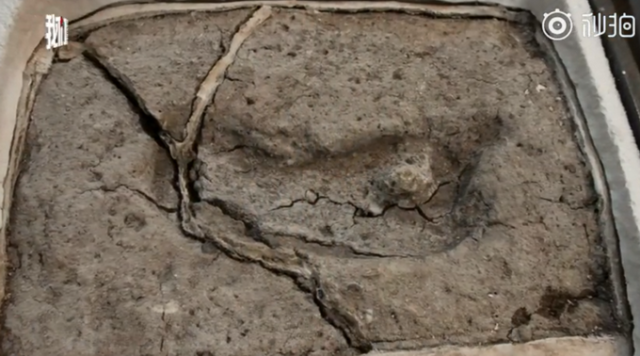 智利南部发现15600年前的脚印