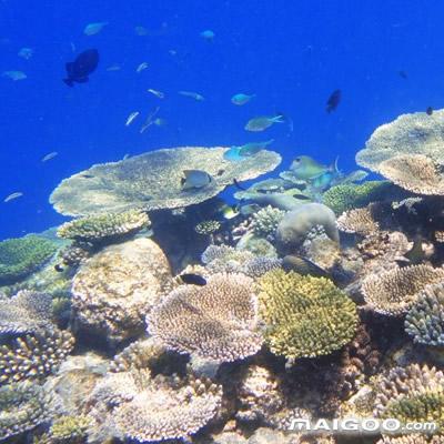 经历死亡后又重生的珊瑚礁