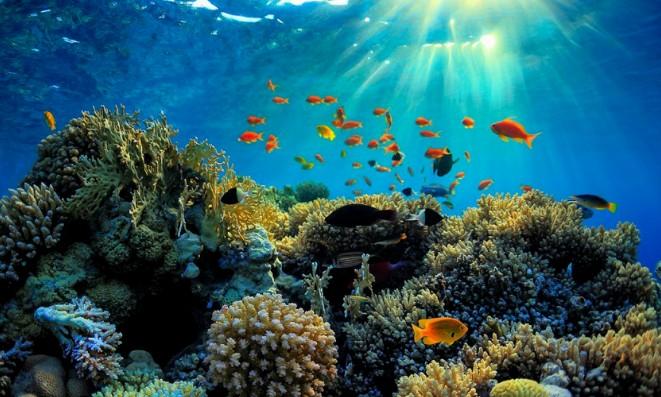 世界上最大的珊瑚礁群即将消失