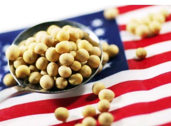 好消息!美国芝加哥CBOT美豆期货涨逾4%