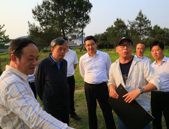 国家文物局副局长调研绍兴市富盛镇宋六陵遗址考古发掘工作
