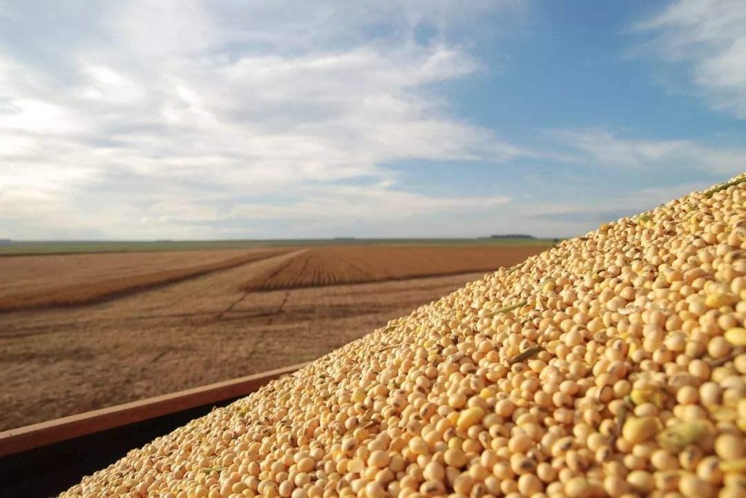 疯狂的豆粕这下会破3000吗?