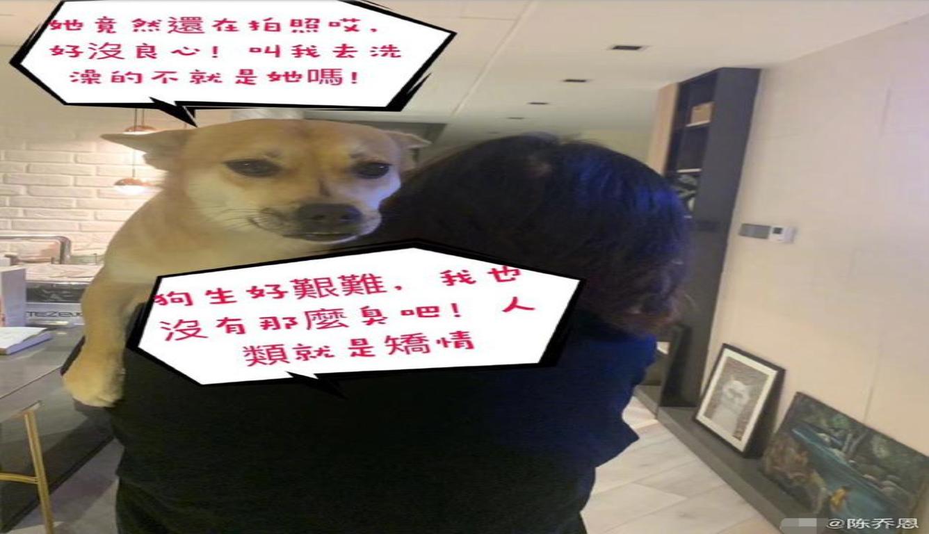 陈乔恩爱犬被调侃 陈乔恩强调福酱是真的很臭