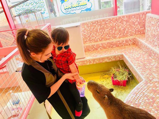 周杰伦一家游日本 昆凌抱小小周喂食小水豚