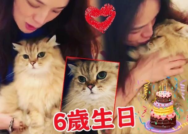 舒淇为爱猫庆祝生日 热情送吻羡煞众网友