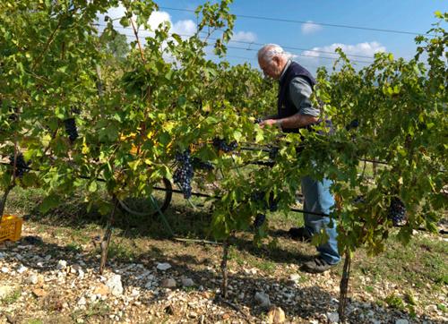 风靡欧美的阿玛罗尼是如何酿成的?