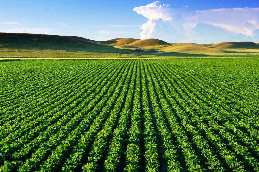 农业种植板块逆势走强 前7月股票基金前十强纷纷重仓农业板块