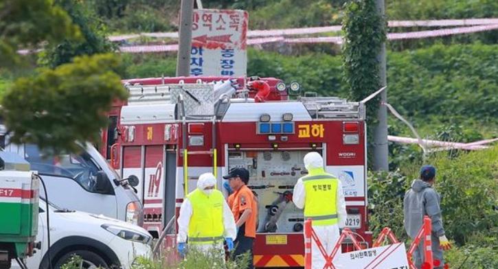 韩国非洲猪瘟疫情 将扑杀近4000头猪