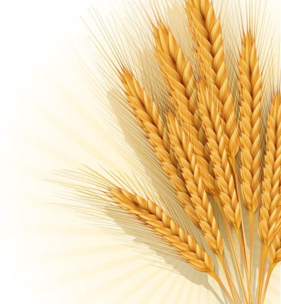 郑商所:修订完善强麦期货相关业务规则