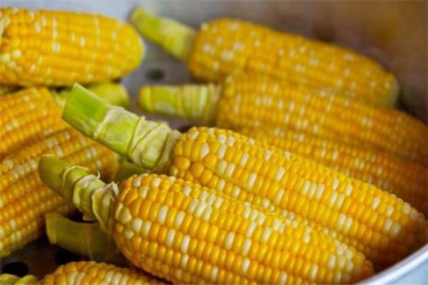 玉米供应端压力增加 需求暂难恢复