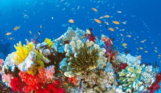 利用波利特斯珊瑚骨骼的形成历史 对用于全球气候预测的记录进行微调