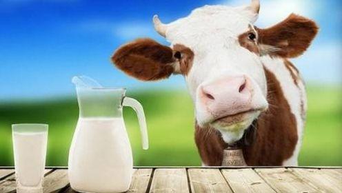 从凭票供应的奢侈品到品质危机 中国乳制品到底怎么了?