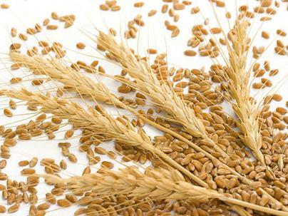 强麦期货规则修订完善