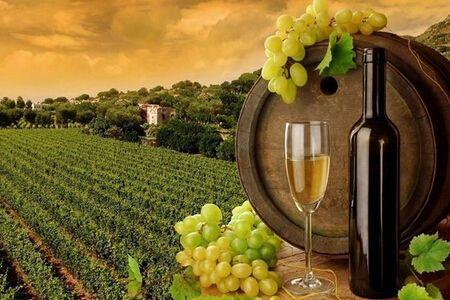 葡萄酒的生产年份可以看出什么信息