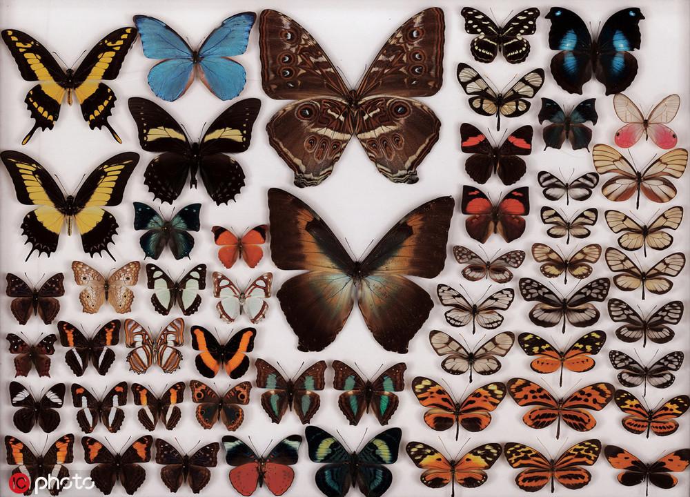10亿像素昆虫照 展现昆虫身体惊人细节