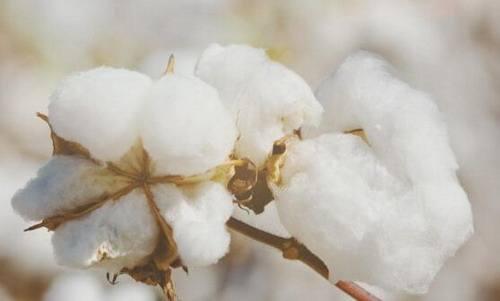 棉价短期存反弹动能