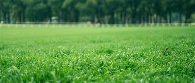 """<b>为交房草坪喷染色剂 """"起死回生""""的草坪!</b>"""