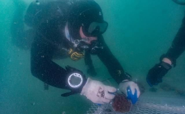 """""""珊海生长纪""""潜水珊瑚保育行动在深圳举行"""
