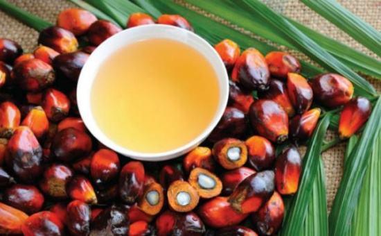 供应预期趋紧 棕榈油期现货同涨