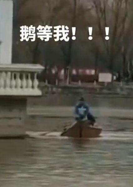 哈师大湖面冻住天鹅 哈尔滨这么冷吗?