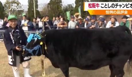日本1头牛168万人民币 这么贵的牛究竟是什么来头?