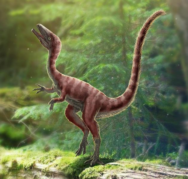 发现恐龙新物种 大小如公鸡