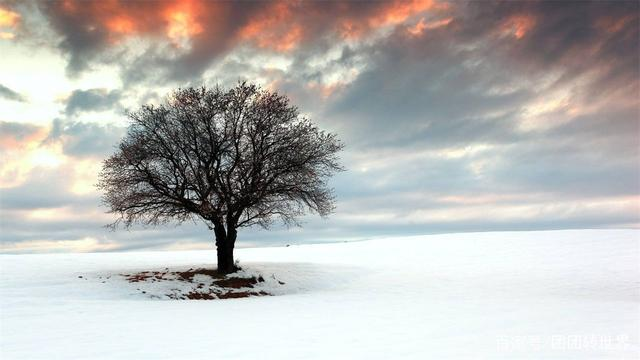 传说中的冰雕酒店 位于北极圈内200公里的地方 最高温度为零下8℃