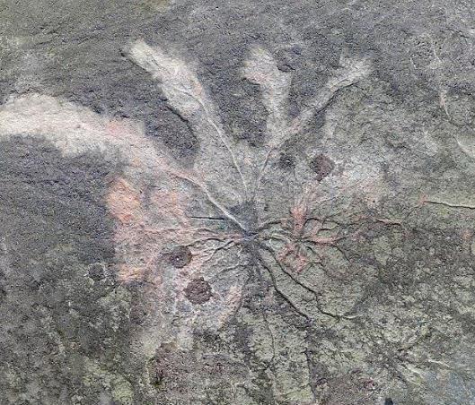 科学家发现全球最古老森林化石 距今3.85亿年