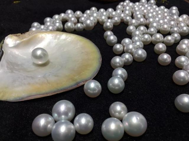 珍珠也是无价珠宝的一种 增值比黄金还快!