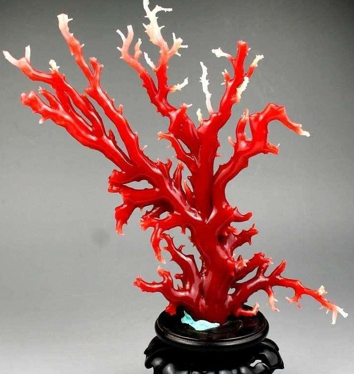 關于紅珊瑚 你了解多少?