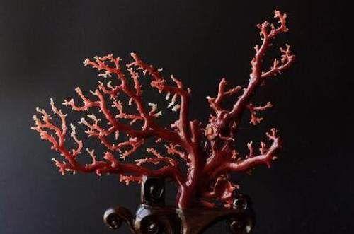 南红玛瑙和红珊瑚的区别