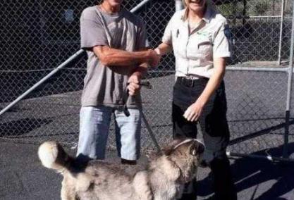 澳大利亚走失狗狗两年后与主人团聚