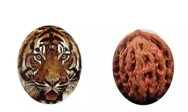 麦穗虎头核桃:核桃形状犹如老虎的头而得名