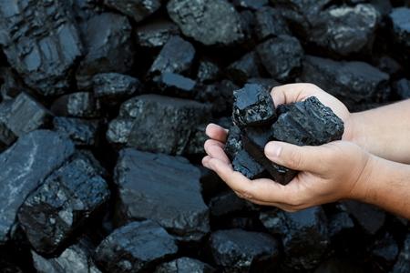 市场拉升影响 动力煤看涨情绪浓厚