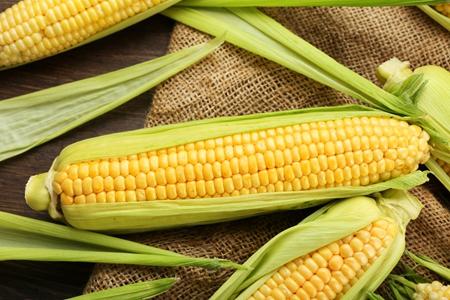 玉米期货偏强波动 DDGS跟涨反应偏慢