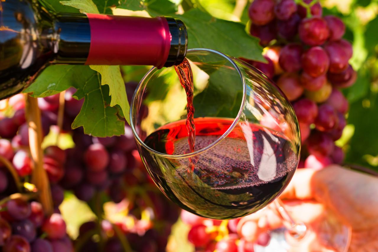 法国葡萄酒行业遭遇寒潮灾害 预计损失50%产量