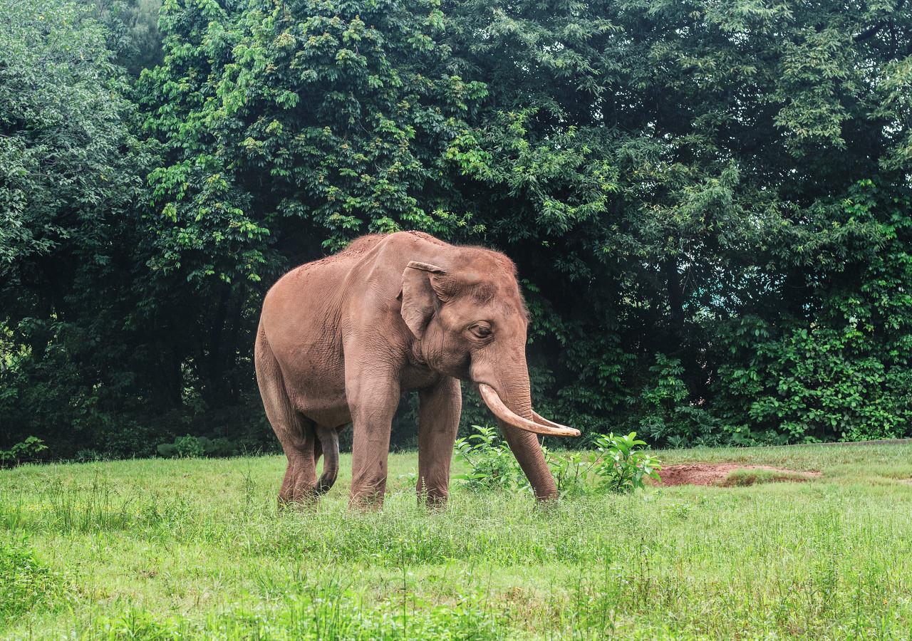 高校发放大象驾驶证 不仅不能骑还要保护好它们