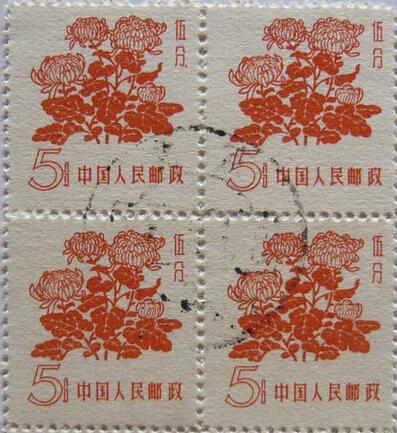 普10花卉--菊花