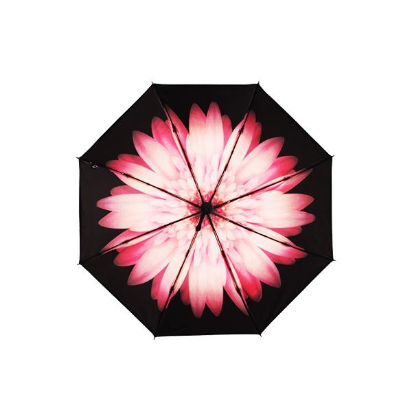 海螺小黑伞-雏菊单层
