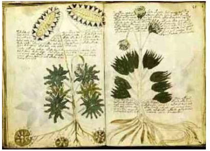 《伏尼契手稿》