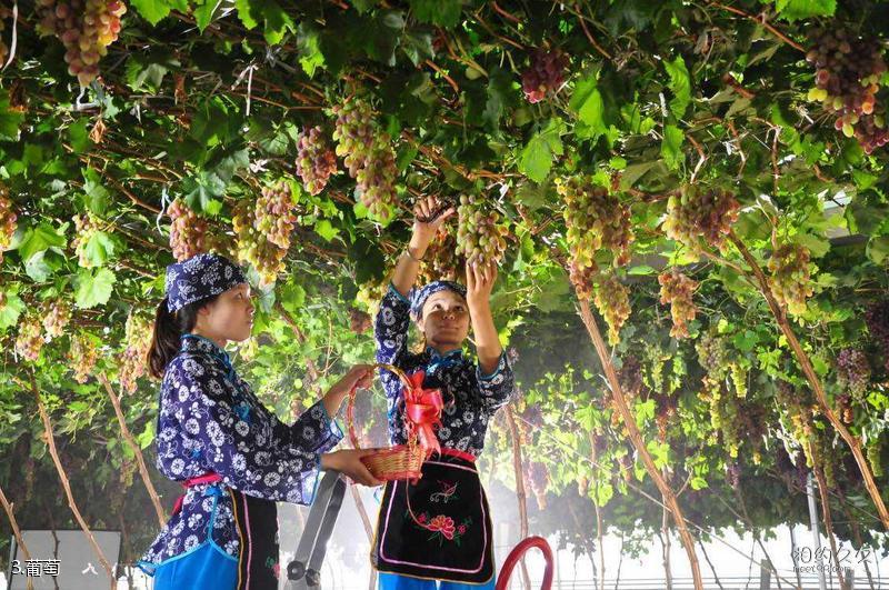 渭南葡萄产业园