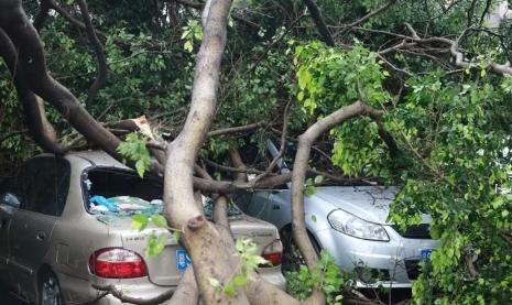 台风之后 你损坏的车子保险能赔吗?